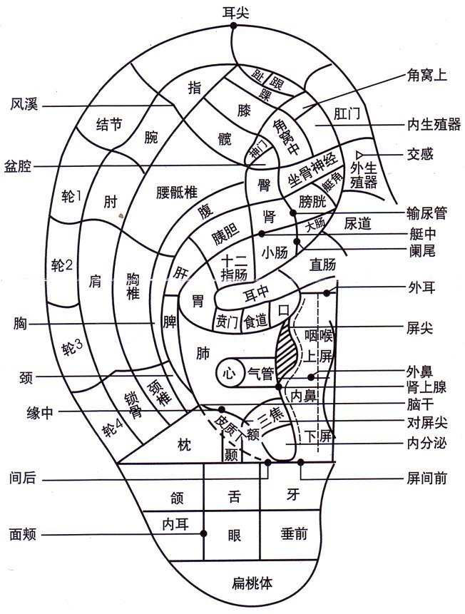 Auriculotherapy map Chinese